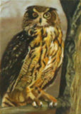 Tawny Owl, Linda Darios