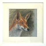 The Fox, Yvonne Gambrill