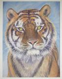Tiger, Yvonne Gambrill