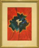 Tulip - Jean Major