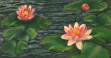 Water Lilies -Jean Major