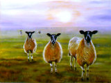 We Three Sheep, Linda Farrington