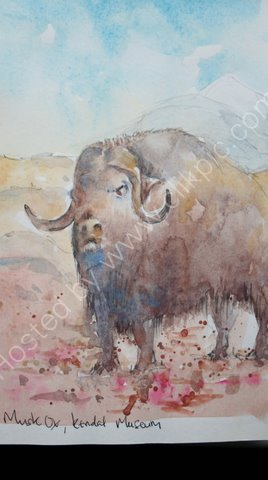 Musk Ox, Kendal Museum