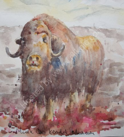 Musk Ox, Kendal Museum