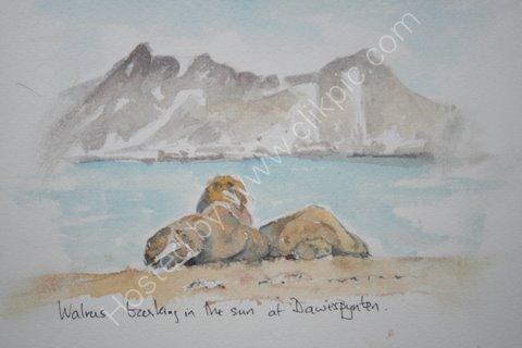 Walruss, Svalbard