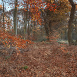 At the edge of Beech Wood