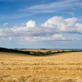 Barley_straw_and_clouds