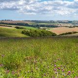 Looking -across -the -meadow
