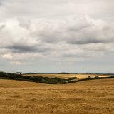 The _barley _harvest