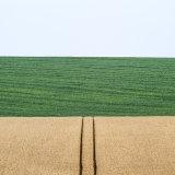 The farmland flag