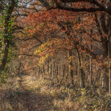 Woodland path with Autumn -colours