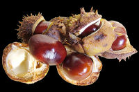 Conkers Too