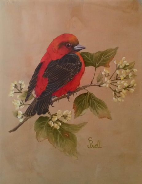 Colin Powell.  Scarlet Tanager