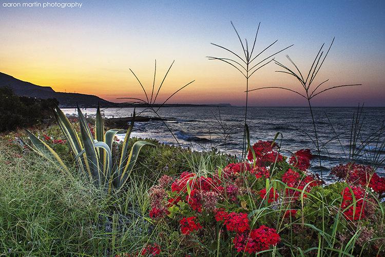 Garden Sunset, Stalis, Crete, Greece