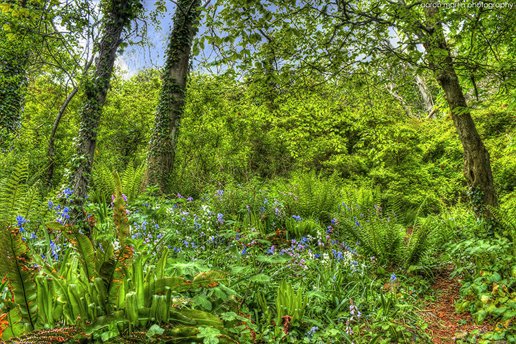 Magic Forest, Whitehead, County Antrim