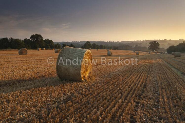 A late summer agricultural scene of round straw bales bathed in golden dawn light set among rolling British countryside.