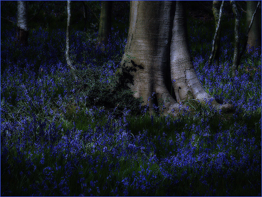 1. Bluebell Wood at Night