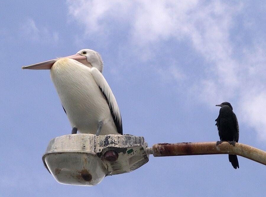 12. Two Birds
