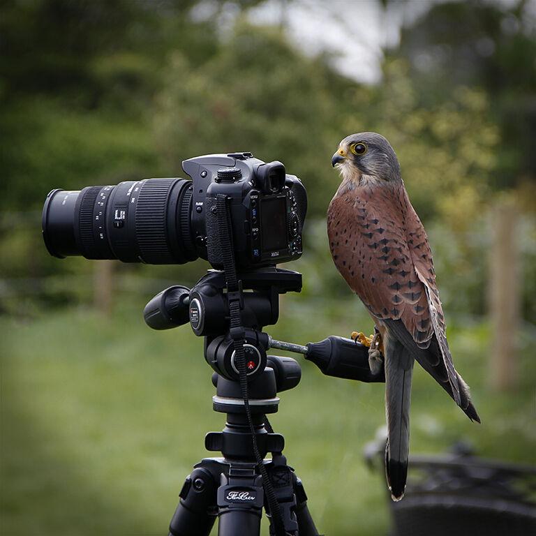 17. Watch The Birdie