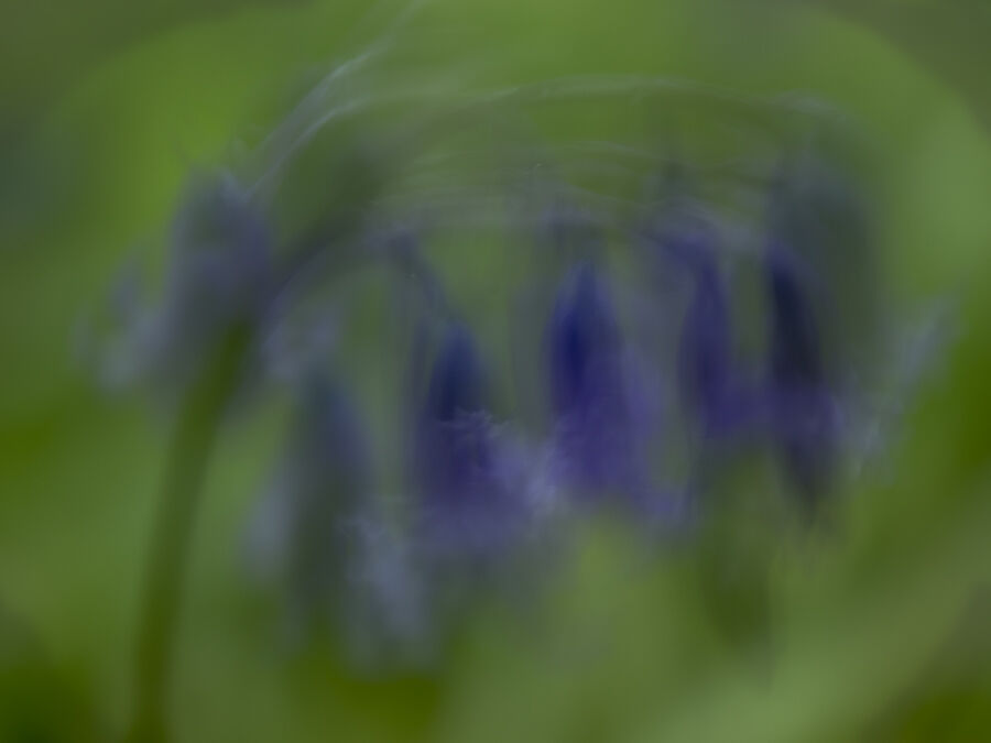 2. Bluebells in the Wind