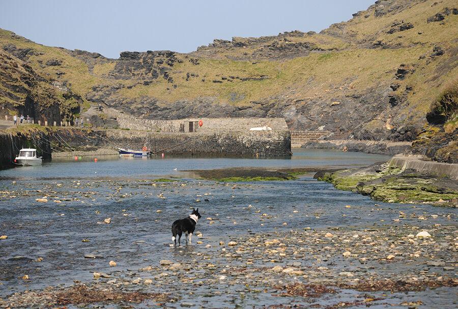 6. Harbour Dog