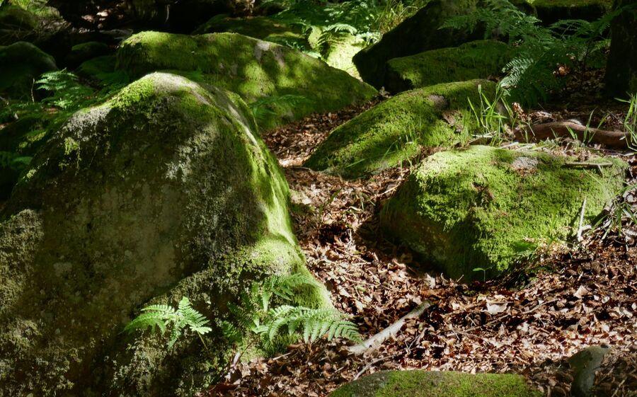 9. Mossy Rocks