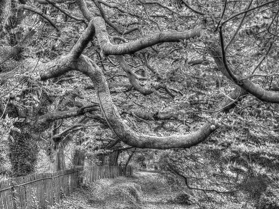 Forgotten path, Culham