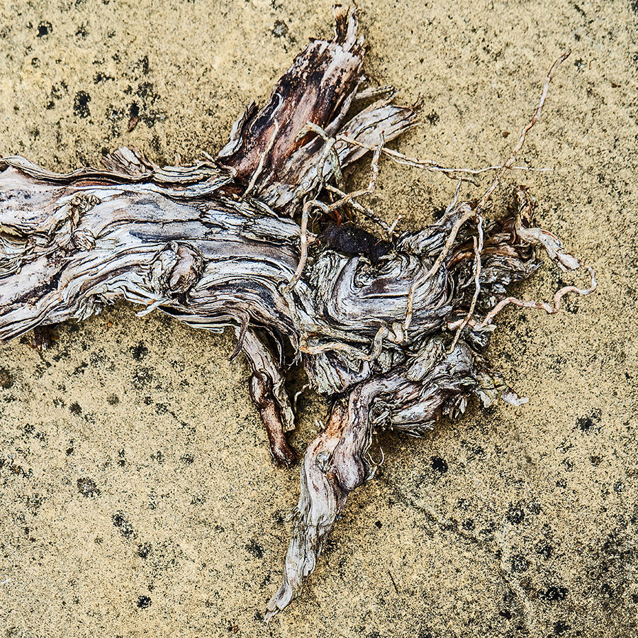 Rotten Root on an Old Flagstone