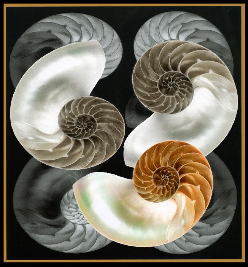 Inside shells