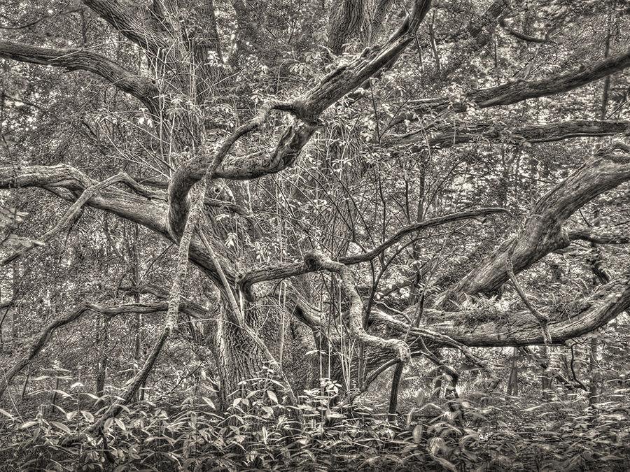 Woodland confusion