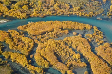 Autumn Willow Trees and Delta where Clutha River Enters Lake Dunstan, Central Otago, South Island, New Zealand - aerial