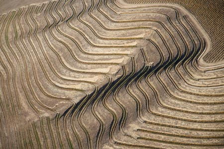 Terraced Vineyard near Lowburn, Central Otago, South Island, New Zealand - aerial