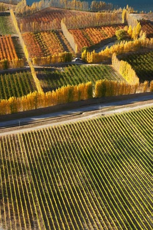 Orchards and Vineyards, Bannockburn, near Cromwell, Central Otago, South Island, New Zealand - aerial
