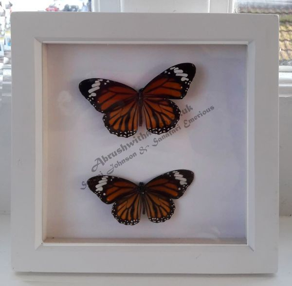 Pinned Butterfly Pair