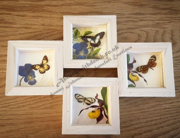 Pinned Butterfly Frames