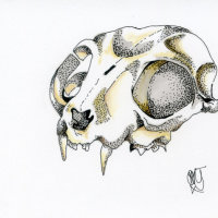 """""""Feline Skull"""""""