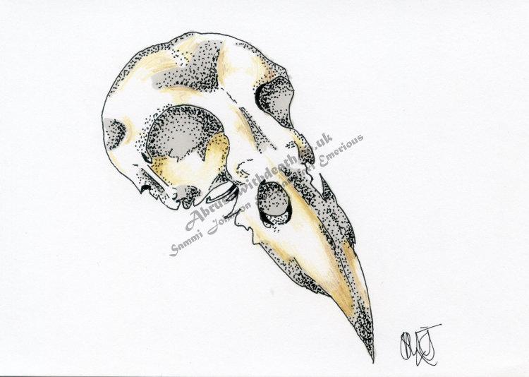 """""""Corvid Skull"""""""
