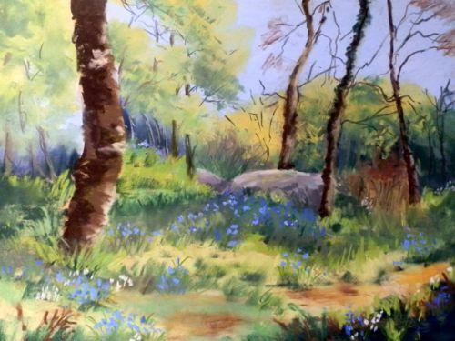 bluebells at caherdaniel