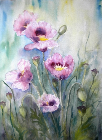 Purple poppies ©