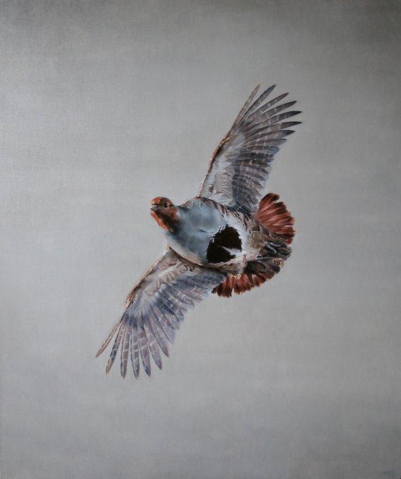Grey Partridge in Flight - Oil on Canvas 120 x 100 cm