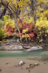 Fall colours and the Virgin River below Angels Landing