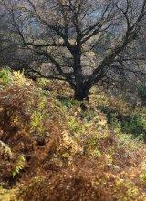 Autumn, North York Moors
