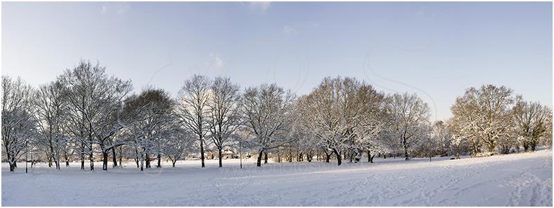 Tree & snow panorama