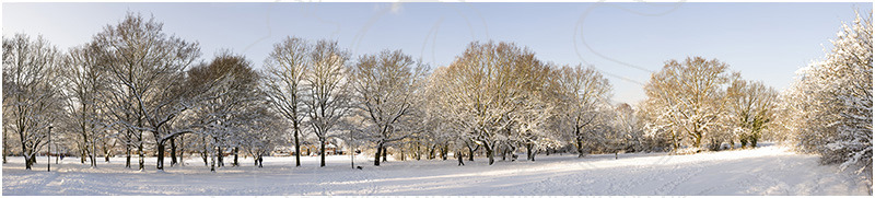 Tree & snow panorama