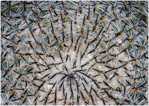 Nest of spikes