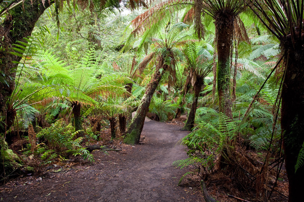 Rainforest Gully
