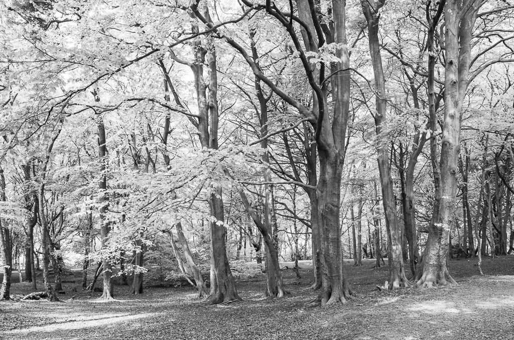 Storeton woods