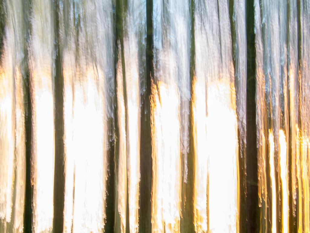 saplings @ sunset