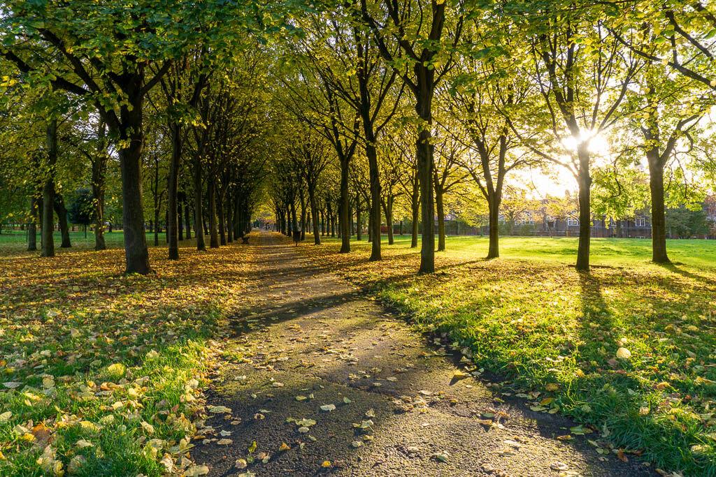 Autumn trees in Port Sunlight