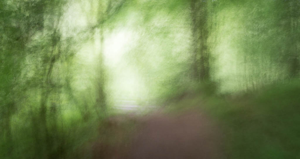 ethereal woods